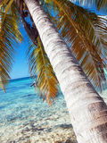Palm tree at tropical beach in Dominican republic. Royalty Free Stock Photography