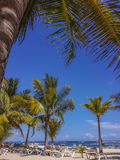Palm tree on the tropical beach, Dominican Republic. Palm tree on the tropical beach, Caribbean Sea. Dominican Republic Stock Photo