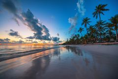 Palm tree on the tropical beach, Dominican Republic. Punta Cana. Palm tree on the tropical beach, sunrise shot Stock Image