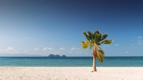 Palm tree and tropical beach. With island on horizon Stock Images