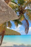 Palm Tree on Tropical Beach Island stock photos