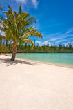 Palm tree on a tropical beach, Isle of Pines. New Caledonia Royalty Free Stock Photos