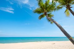 Palm tree on tropical beach. Landscape of coconut palm tree on tropical beach in summer. Summer background concept Royalty Free Stock Photography