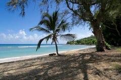 Palm Tree on Tropical Beach Stock Image