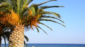 Palm tree on the tropical beach, magnificent nature, excite wish holiday Royalty Free Stock Image