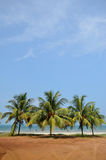 Palm tree on the tropical beach near sea. Water with sky background Royalty Free Stock Image