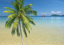 Palm Tree On A Tropical Beach. With ocean in the background Royalty Free Stock Images