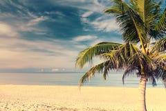 Palm tree in tropical beach at Phuket. Thailand Stock Photos