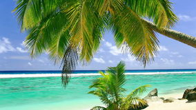 Palm tree on tropical beach of Rarotonga, Cook Islands. Single Palm tree on tropical beach of Rarotonga, Cook Islands stock footage