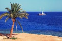 Palm tree on tropical beach Stock Photos