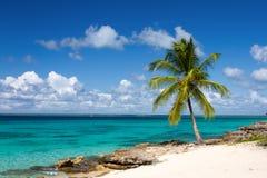 Palm tree on the tropical beach. Saona Island, Caribbean Sea Royalty Free Stock Photos