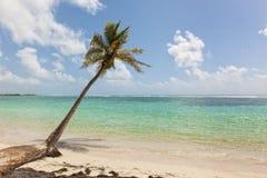 Palm tree at tropical beach. Single palm tree at tropical beach reaching into Caribbean Sea Royalty Free Stock Photos