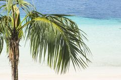 Palm tree and tropical beach with beautiful colors Royalty Free Stock Photography