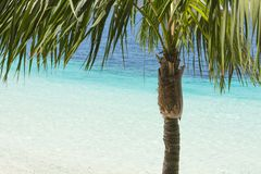 Palm tree and tropical beach with beautiful colors Royalty Free Stock Photos