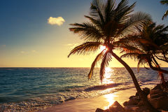 Palm tree on the tropical beach. Sunrise shot Royalty Free Stock Photo