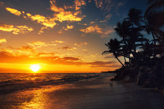 Palm tree on the tropical beach. Sunrise shot Stock Images