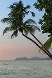 Palm tree on tropical beach after sunset. Travel. Royalty Free Stock Photos