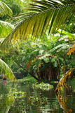 Palm tree tropical forest in backwater of Kochin, Kerala, India Royalty Free Stock Photography