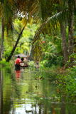 Palm tree tropical forest in backwater of Kochin, Kerala, India Stock Image