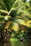 Palm tree tropical forest in backwater of Kochin, Kerala, India Royalty Free Stock Images