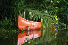 Palm tree tropical forest in backwaters. Royalty Free Stock Images
