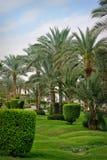 Palm tree in tropical garden Stock Photos