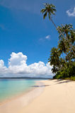 Palm tree on tropical island beach Royalty Free Stock Photo