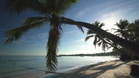 Palm tree on tropical island beach and beautiful Caribbean sea. Dominican Republic.  stock video footage