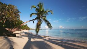 Palm tree on tropical island beach and beautiful Caribbean sea. Dominican Republic.  stock video