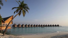 Palm tree on tropical island at ocean. Maldives Royalty Free Stock Photography