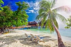 Palm tree on tropical island with turquoise clear water and overwater bungalow, Maldives. Palm tree on tropical island with turquoise clear water and overwater Stock Image