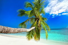Palm tree on tropical island with turquoise clear water. Palm tree on tropical island with sandy beach and turquoise clear water Royalty Free Stock Photography
