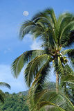 Palm tree in tropical jungle Royalty Free Stock Photo