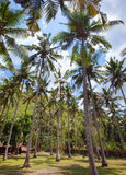 Palm tree. tropical landscape Stock Images