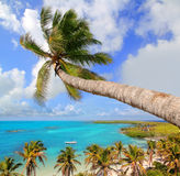 Palm tree in tropical perfect beach Royalty Free Stock Photo