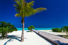Palm tree in tropical perfect beach with jetty Stock Photos