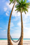 Palm tree in tropical perfect beach at Koh Kood , Thailand Royalty Free Stock Photos