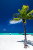 Palm tree in tropical perfect beach at Maldives with jetty Royalty Free Stock Images