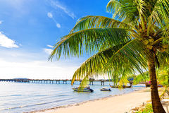 Palm tree in tropical perfect beach at Phuket Royalty Free Stock Images