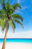 Palm tree in tropical perfect beach at Phuket. Royalty Free Stock Images