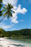 Palm tree at a Tropical Raja Ampat Beach with blue Stock Images