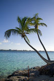Palm tree tropical shoreline Stock Photo