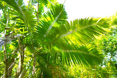Palm tree and tropical vegetation Stock Photos