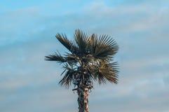 Palm tree tropics sky royalty free stock photo