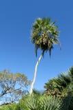 Palm tree in tropics Stock Image