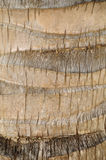 Palm tree trunk Royalty Free Stock Photo