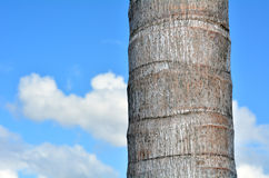 Palm tree trunk against blue sky Stock Photos