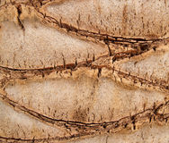 Palm tree trunk background Stock Images