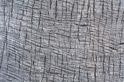 Palm tree trunk background texture Royalty Free Stock Image