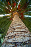 Palm tree trunk bark and leaf background. Palm tree trunk bark and leaf looking upward laying down and relaxation in tropical paradise palm background stock photography